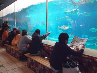 こたつ 須磨水族館.jpg