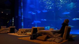 こたつ水族館.jpg